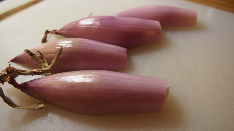 salottisipuli